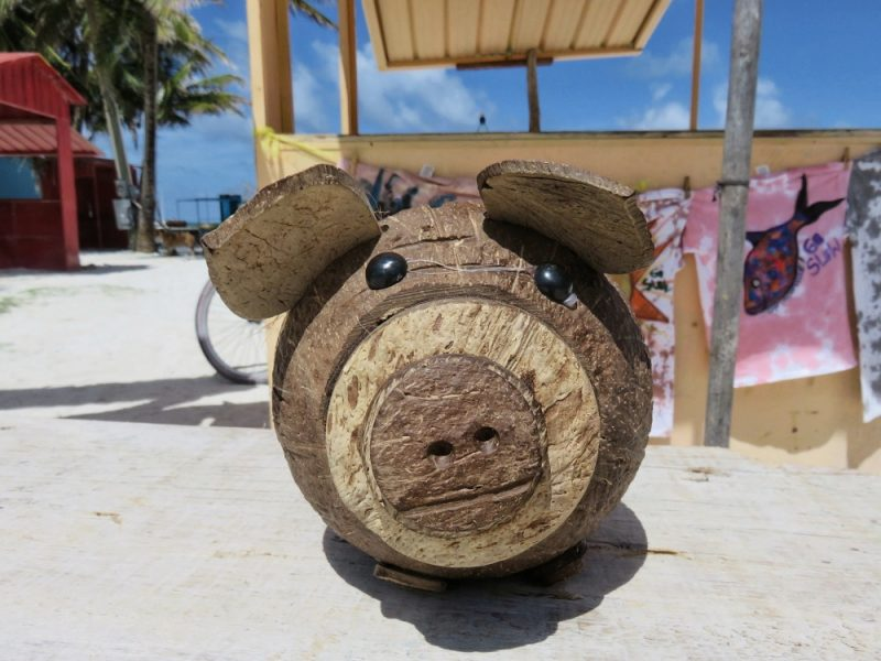 Belize Currency - Coconut Piggy Bank