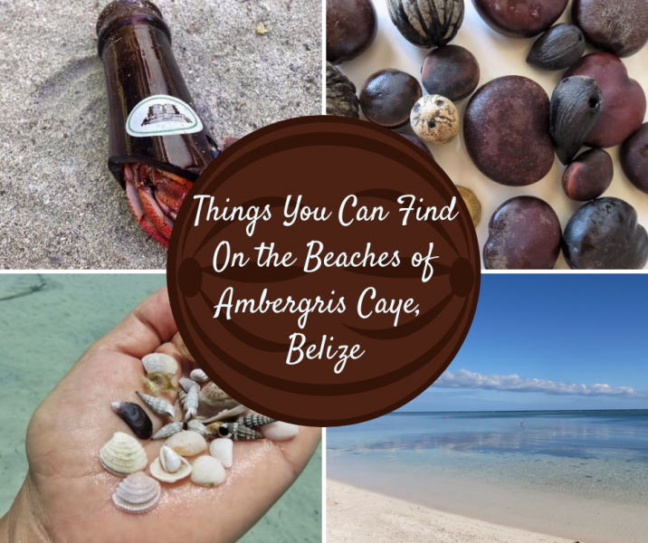 Beachcombing in Belize from Shells to Seabeans to Seagrass and More