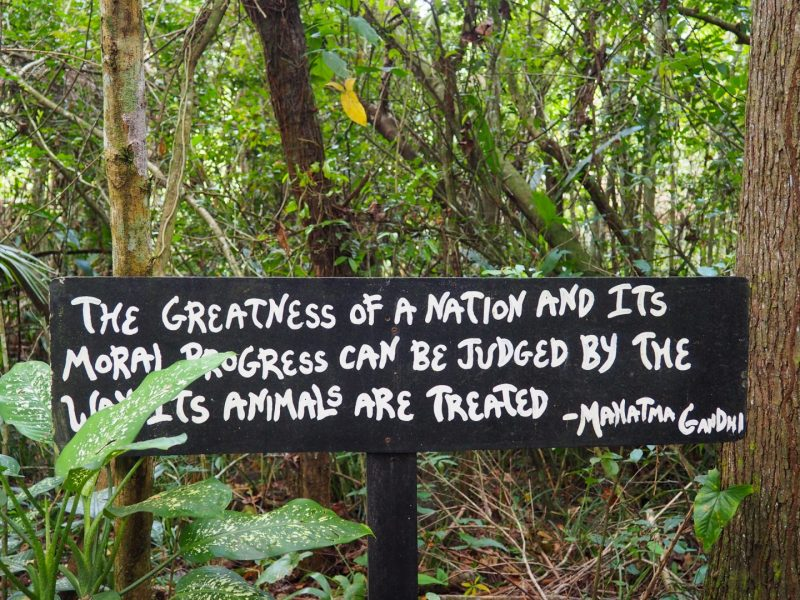 Gadhi Quote at the Belize Zoo